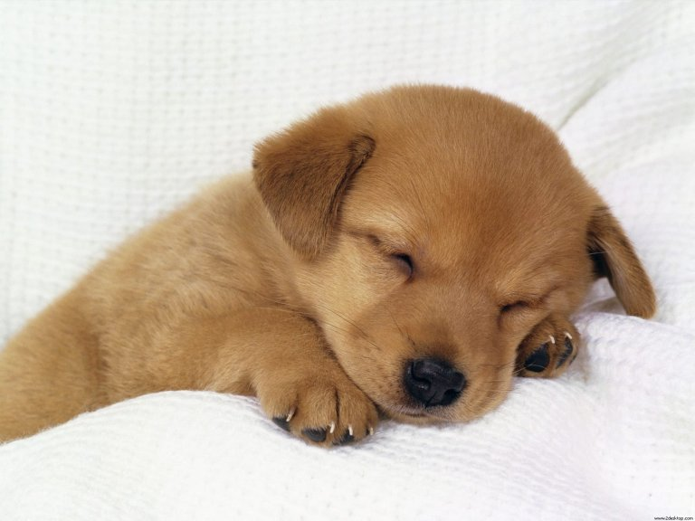 puppy4